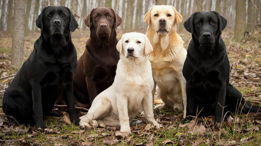200 Top Male Dog Names with Meanings- Pick a Name for your