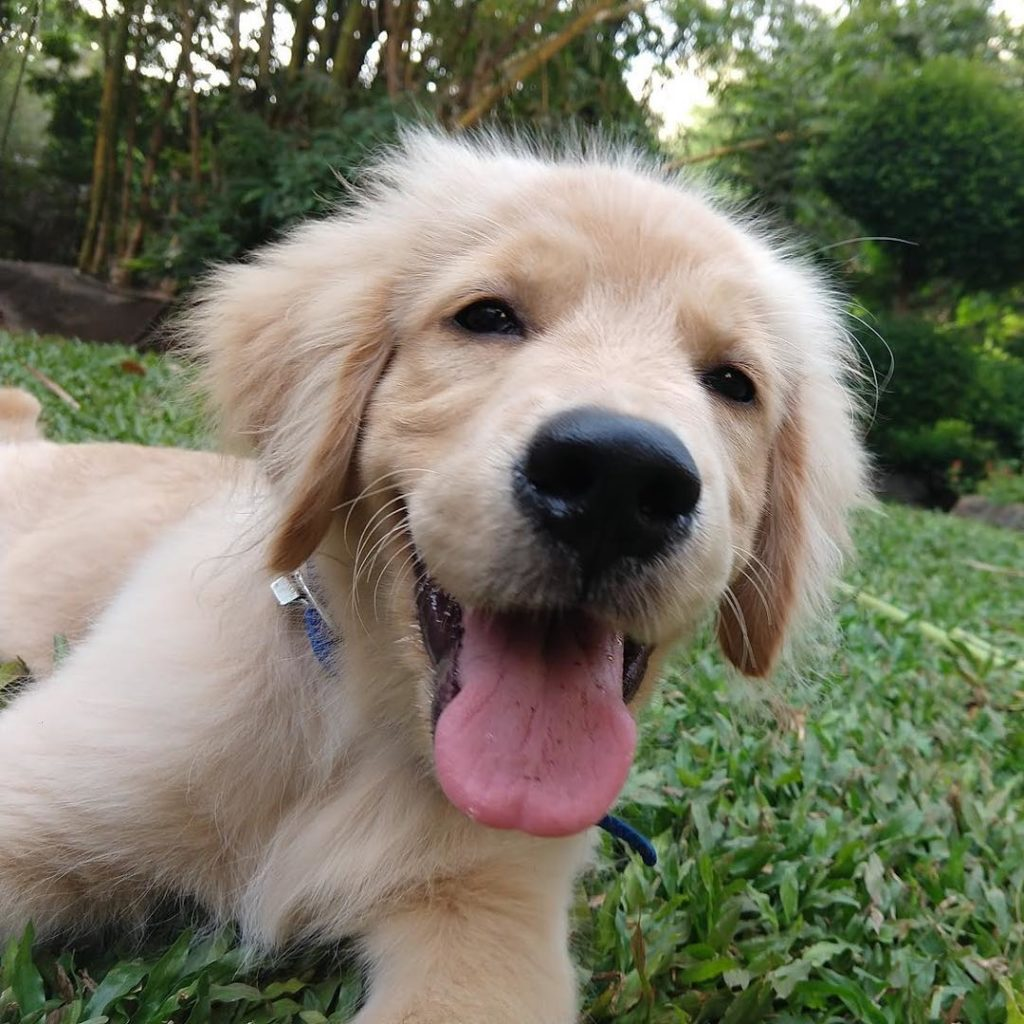 116 Best Southern Dog Names with Meanings - All About Pets
