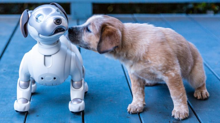 Names for Your Techno Friendly Pooch