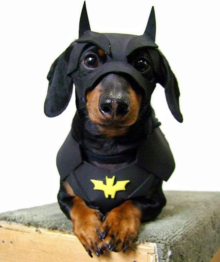 Superhero Names for Super Dogs