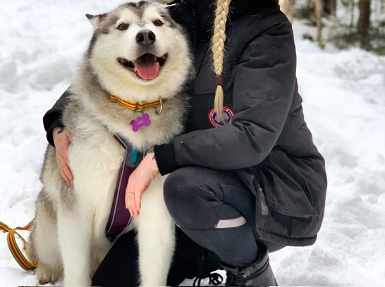 Geography Inspired Names for Your Alaskan Malamute