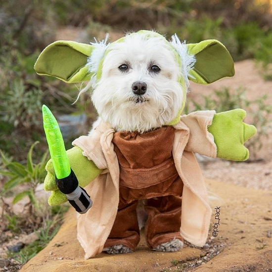 Star Wars Nerdy Dog Names