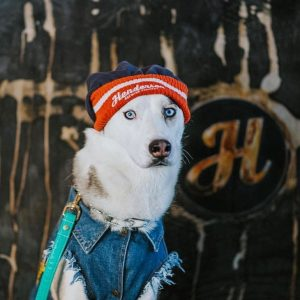 Best Badass Husky Dog Names