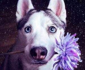Best Exotic Husky Dog Names