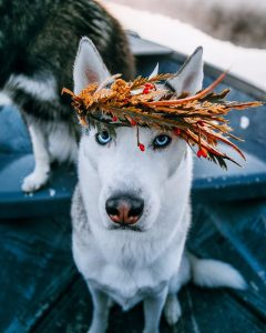 Best Girl Husky dog names
