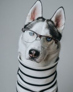 Best Nerdy Husky Dog Names