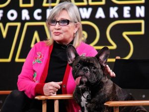 Celebrity Names for French Bulldogs