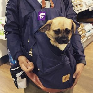 Dog Back Pack Carrier