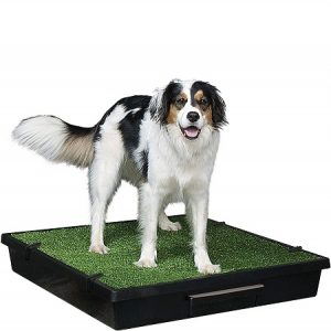 PetSafe Pet Loo Portable Indoor Outdoor Dog Potty, Alternative to Puppy Pads