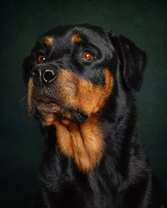 Aggressive Female Rottweiler Names